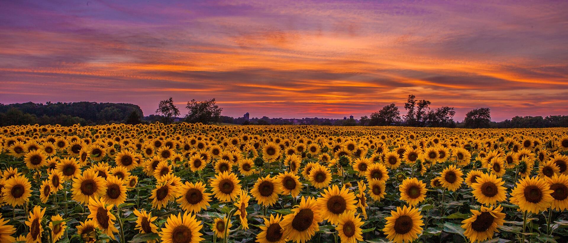 Somerset, New Jersey, Estados Unidos da América