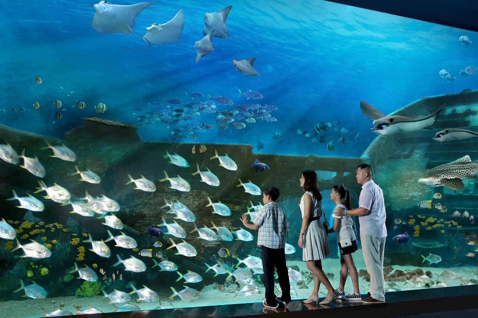 S E A Aquarium Singapore Family