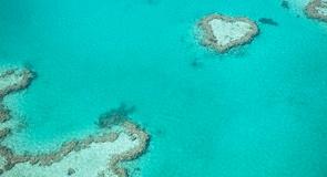 Reef Fleeti terminal