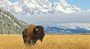 Jackson Hole and Greater Yellowstone Visitor Center (centre d'accueil des visiteurs)