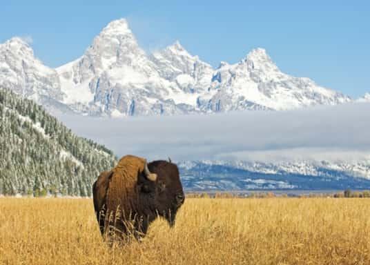 Jackson, Wyoming, Estados Unidos