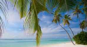 Пляж Coconut Beach