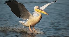 Suncoast Deniz Kuşu Cenneti