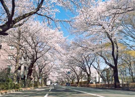 Kodaira, Japón