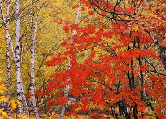 Oxon Hill, Maryland, United States of America