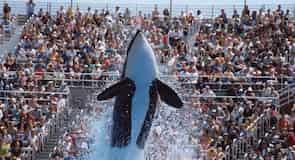 Parque de espectáculos acuáticos SeaWorld