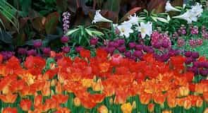 Royal Botanical Gardens (jardín botánico)