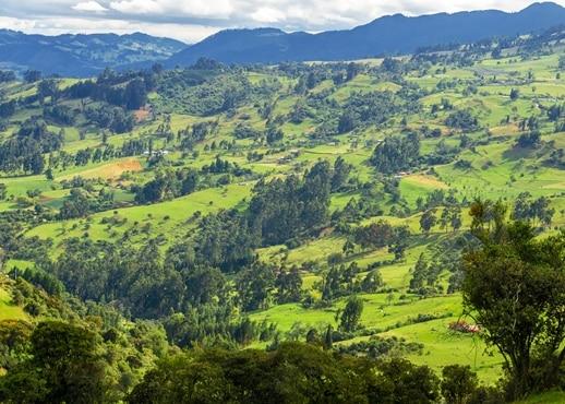 기라도트, 콜롬비아