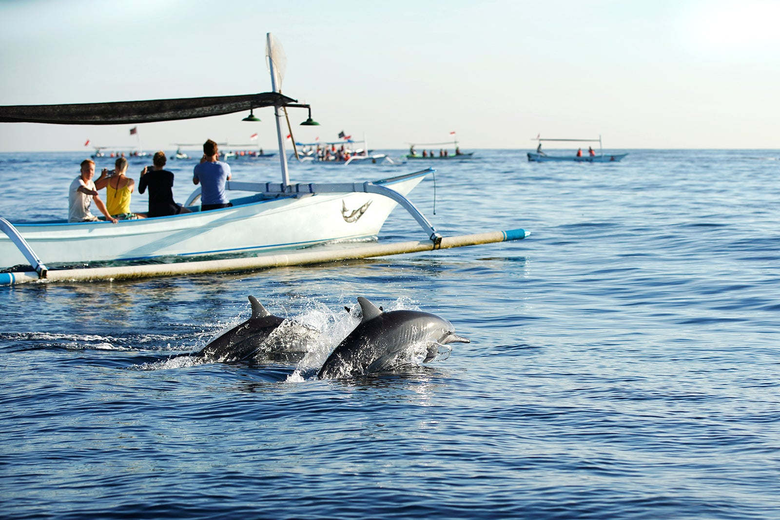 Dolphin Watching at Lovina Beach - Boat Rides to Watch Dolphins in North  Bali - Go Guides