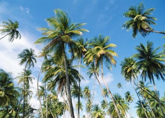 Port d'Espagne, Trinité-et-Tobago