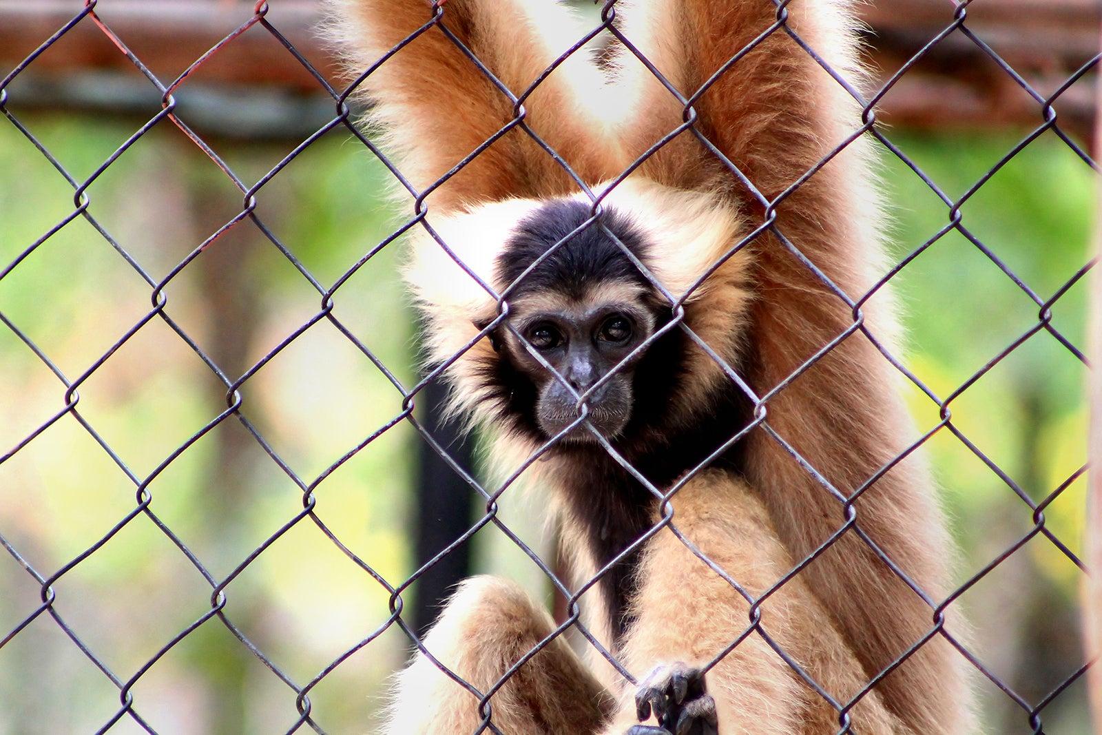 Phnom Tamao Zoo near Phnom Penh - Phnom Penh Attractions