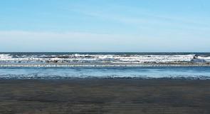 חוף Ocean Shores
