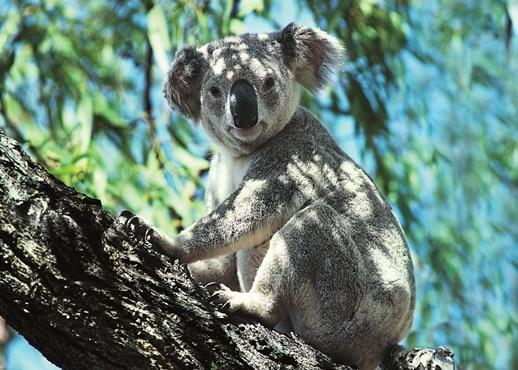 Fig Tree Pocket, Queensland, Australia
