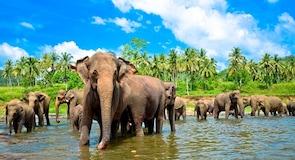 Maesa Elephant Camp laukinės gamtos teritorija