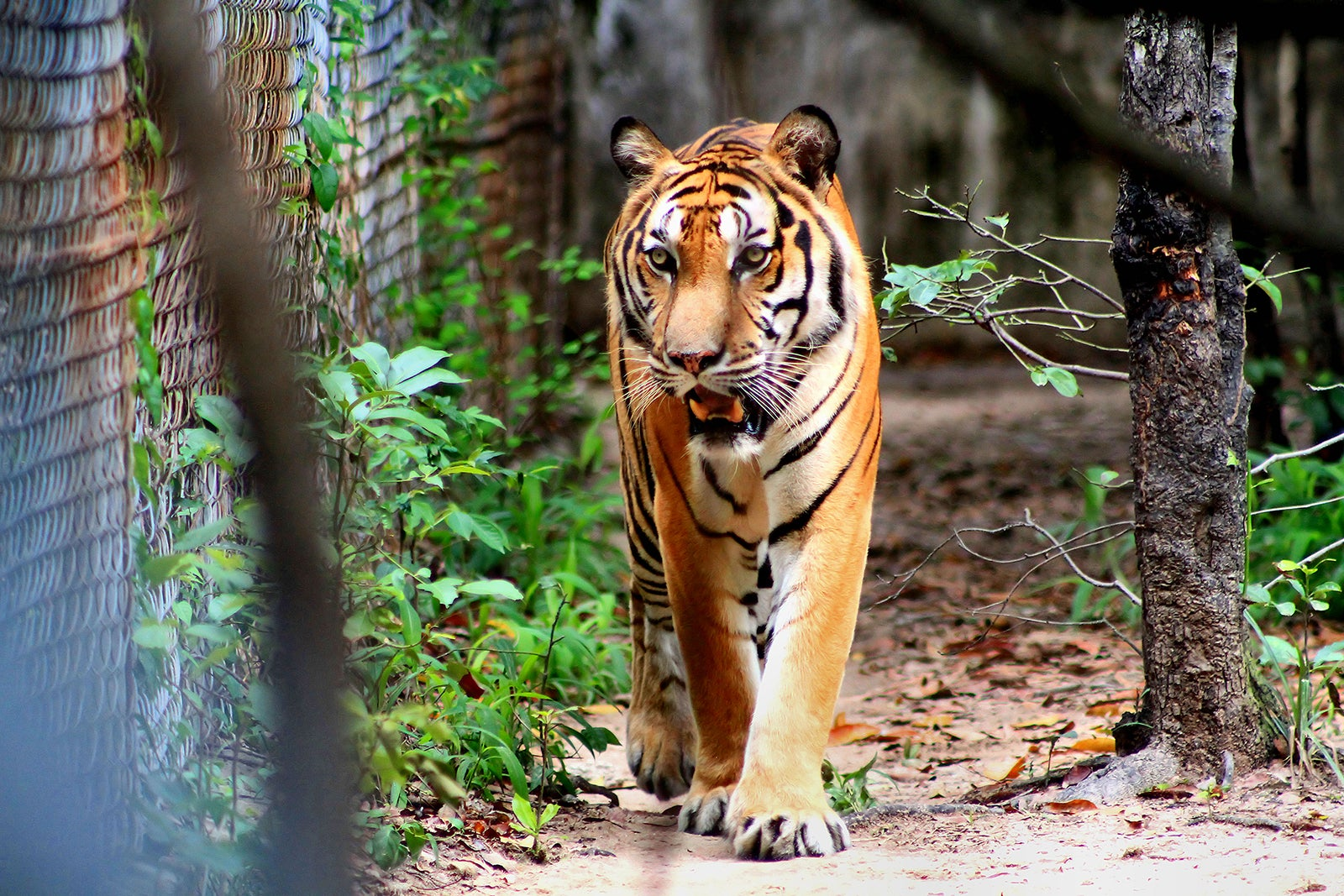 Image result for Phnom Tamao Wildlife Rescue Centre,