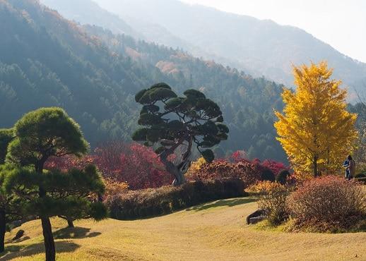 加平, 韓國