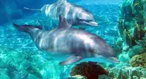 Drobak Aquarium