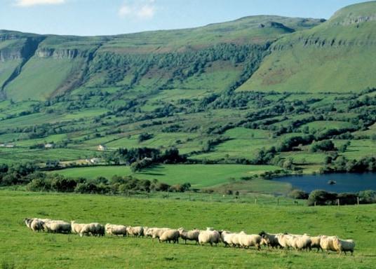 Enniscorthy, Irsko