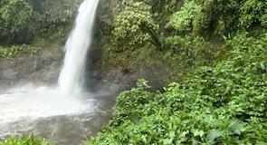 Chirripo Nemzeti Park