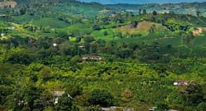 阿拉卡塔卡