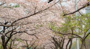 Namsan Botanical Garden