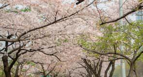 Botanički vrt Namsan