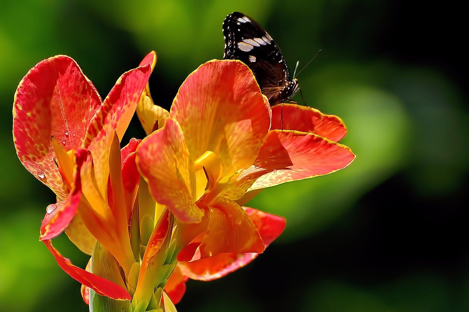 Terrazas De Flores Botanical Garden A Peaceful Escape In Cebu