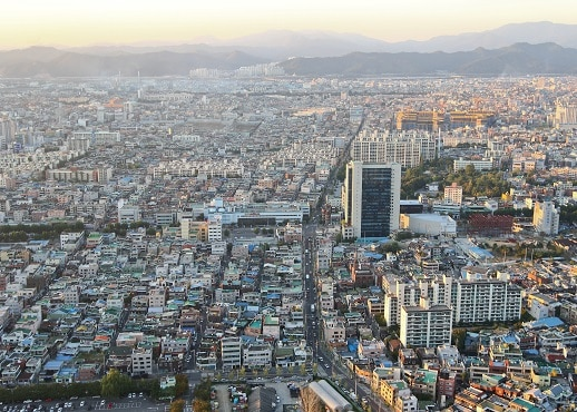 Tegu, Pietų Korėja