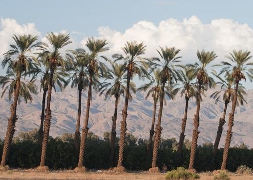Indio, Kalifornia, Spojené štáty