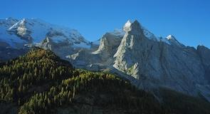 Padola