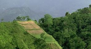 Bonao
