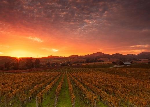 Údolí Napa Valley, Kalifornie, USA
