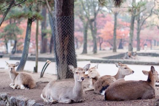 奈良, 日本