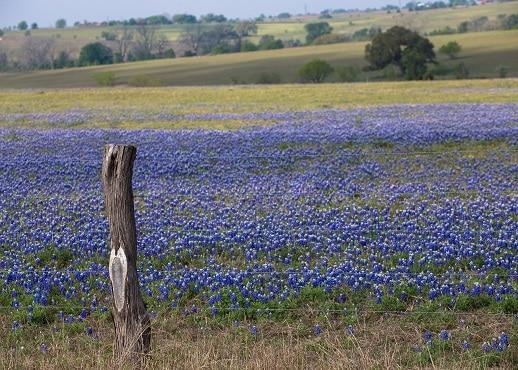 Luling, Teksas, Sjedinjene Američke Države