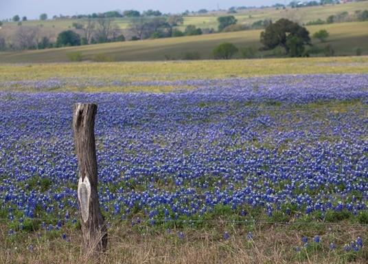 레드 록, 텍사스, 미국