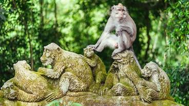 ป่าลิง