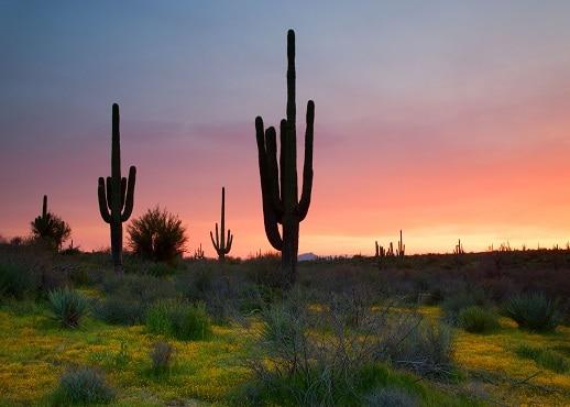 Eloy, Arizona, United States of America