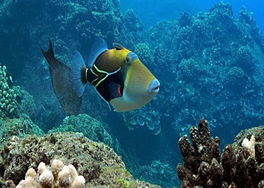 Kapaa, Hawaii, Amerika Serikat