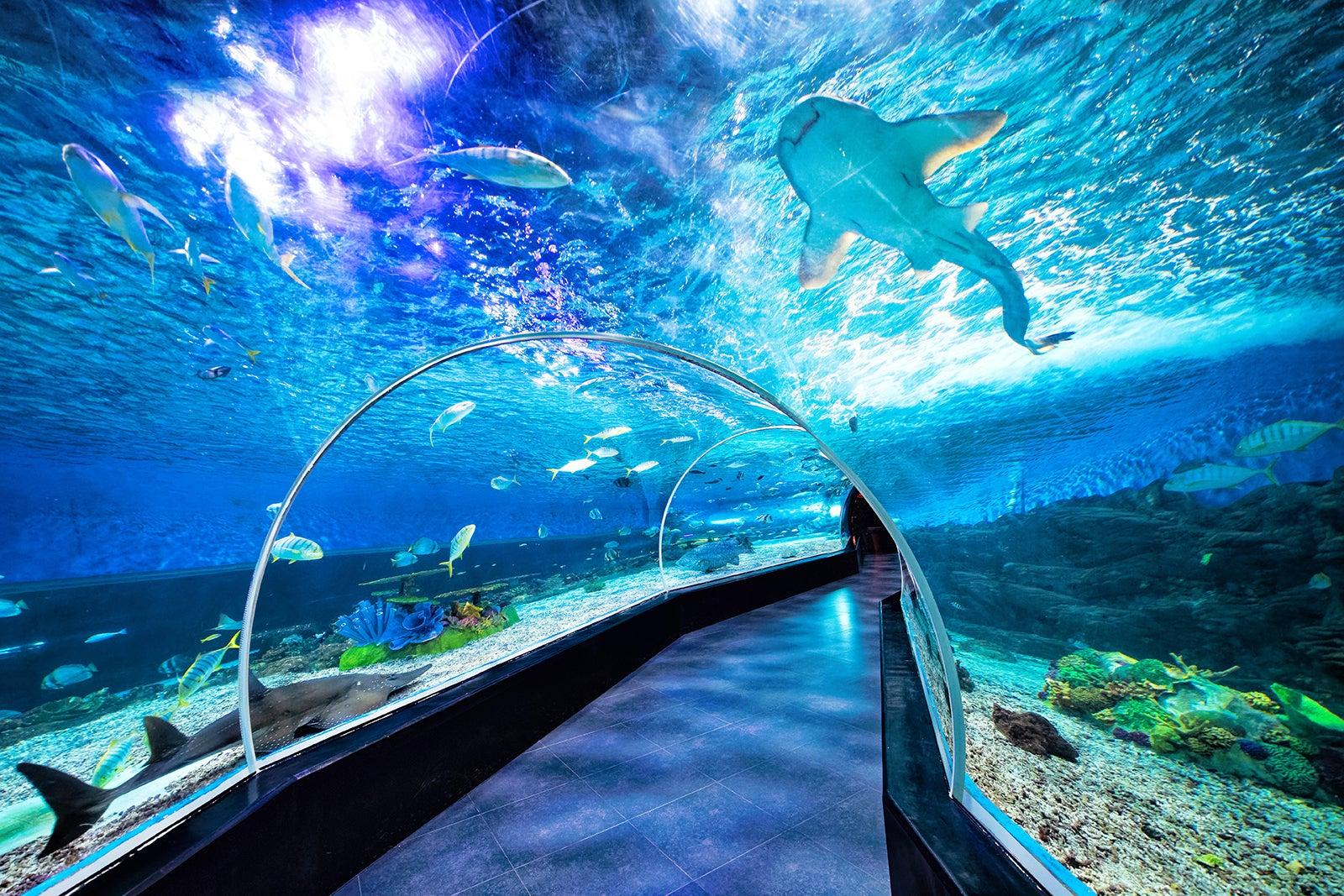 [Chia sẻ] Khám phá du lịch Ocean Park, công viên Đại Dương, Manila, Philippines