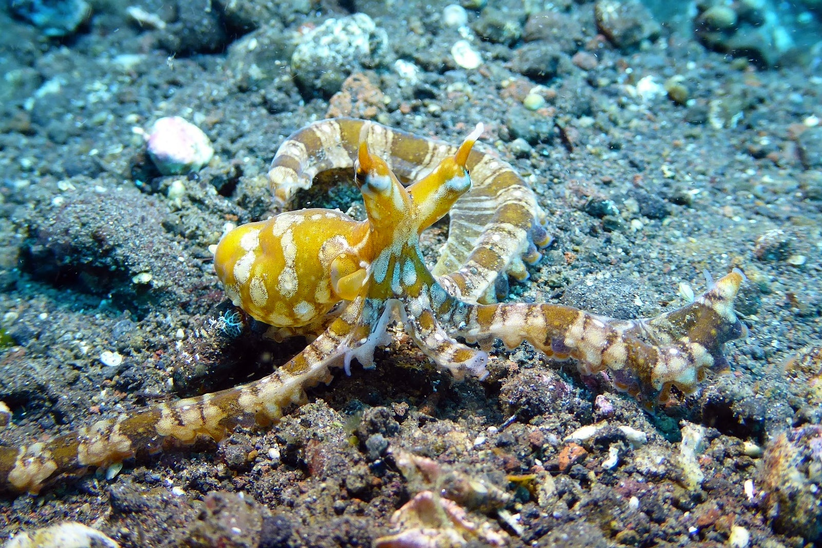 Scuba Diving In Bali A Guide For 1st Time Divers In Bali