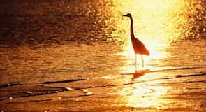 Bubali Bird Sanctuary