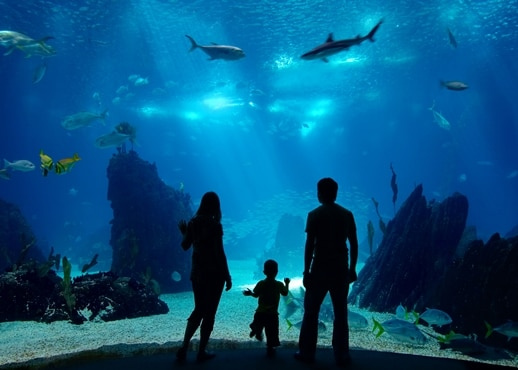 Top 10 Boston Hotels Near New England Aquarium Machusetts